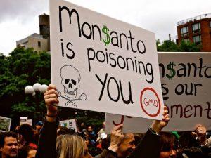 Monsanto este furnizor de seminţe modificate genetic de porumb,   boabe de soia,   bumbac,   grâu şi trestie de zahăr,   care au atras numeroase critici din partea activiştilor de mediu.