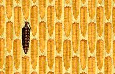 Bayer şi Monsanto: alianţa secolului
