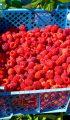 Râșca, raiul zmeurei: Apuseni Fruct, sau cum un hobby se transformă în afacere profitabilă