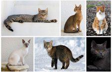 Geniale, arogante, celebre: pisici în literatură