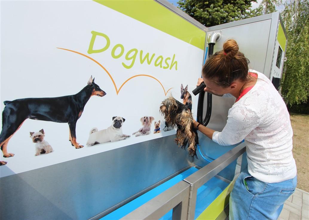 Phil, printre primii câini din Cluj care a încercat serviciile spălătoriei/Foto: Dan Bodea