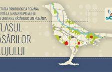 Păsările Clujului au fost incluse într-un atlas care se lansează miercuri