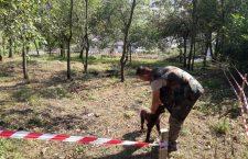 Concurs de câini dresaţi să caute trufe