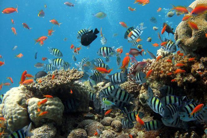 Biobază-acvariu