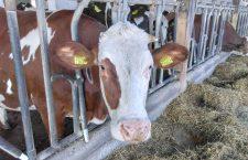 """Crescătorii de vaci români și olandezi au fraternizat – """"Împreună pentru o fermă mai bună"""""""