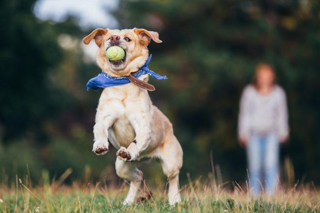 #dogsarefamily3