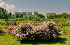 GALERIE FOTO Întâlnire cu oamenii trandafirilor și cele 44 de soiuri create la Cluj