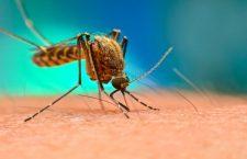 Prea cald și prea multe ploi: Atenție la înțepăturile țânțarilor. Există riscul infecției cu virusul West Nile