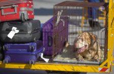 Aeroportul din Cluj, autorizat să introducă în România animale de companie din țări terțe