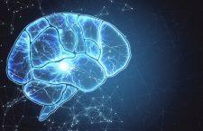 Start în cel mai mare proiect de studiu asupra creierului la UBB Cluj – peste 90 de milioane de lei