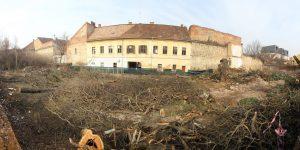 Verificări în regim de urgență, după ce mai mulți arbori seculari au fost tăiați din prima Grădină Botanică a Clujului