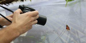 Fluturi exotici pot fi admirați într-o expoziție la grădina botanică
